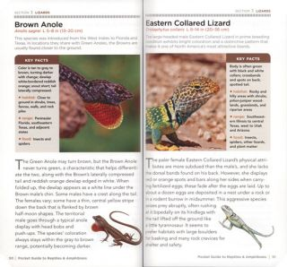 National Geographic pocket guide to reptiles and amphibians of North America.