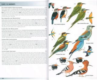 Birds of Madagascar and the Indian Ocean Islands.