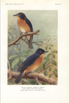 The birds of the Malay Peninsula: a general account of the birds inhabiting the region from the Isthmus of Kra to Singapore with the adjacent islands, volume four: the birds of the low-country jungle and scrub.