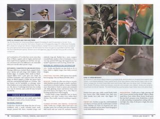 Peterson reference guide to birding by impression: a different approach to knowing and identifying birds.