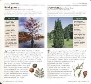 National Geographic trees and shrubs of North America: pocket guide.