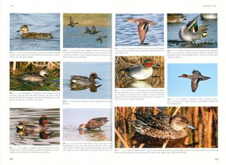 Wildfowl of Europe, Asia and North America.