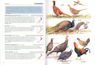 The hand guide to the birds of New Zealand.