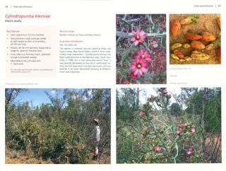 Feral opuntioid cacti in Australia: part I. cylindrical-stemmed genera: Austrocylindropuntia, Cylindropuntia and Corynopuntia.
