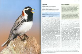 Better birding: tips, tools and concepts for the field.