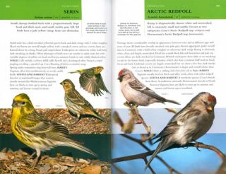Collins BTO guide to rare British birds.