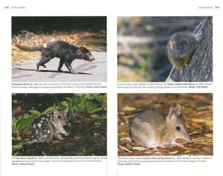 The complete guide to finding the mammals of Australia.