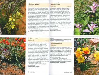 Wildflowers of Namaqualand: a Botanical Society guide.