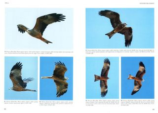 Flight identification of raptors of Europe, North Africa and the Middle East.