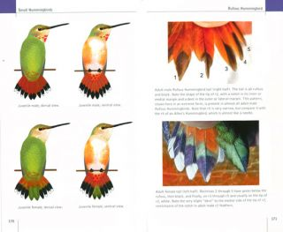North American hummingbirds: an identification guide.