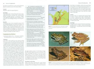 Marsupial frogs: Gastrotheca and allied genera.