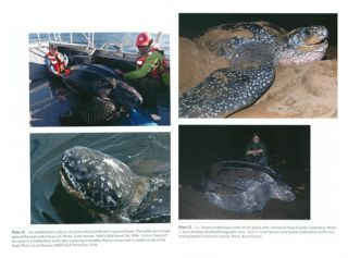 The Leatherback turtle: biology and conservation.