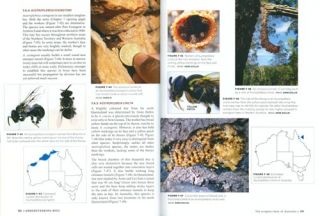 The Australian native bee book: keeping stingless bee hives for pets, pollination and sugarbag honey.