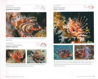 Tropical marine fishes of Australia: a guide for waters from the Abrolhos Islands to Lord Howe Island.