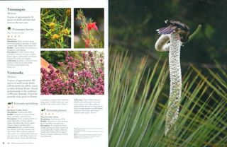Birdscaping Australian gardens: using native plants to attract birds to your garden.