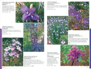 Find that flower: colour guide to the wildflowers of the Cape to Cape Track and Australia's Southwest corner.
