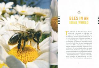 More than honey: the survival of bees and the future of our world.