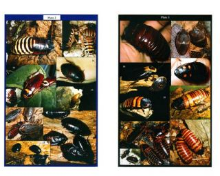 Allpet roaches: care and identification handbook for the pet and feeder cockroaches.