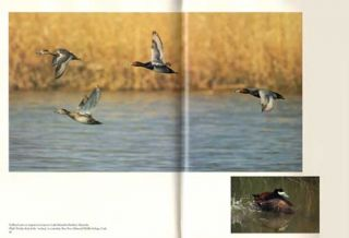 Magnificent voyagers: waterfowl of North America.