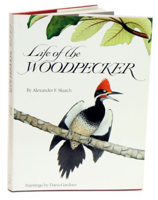 Life of the woodpecker.