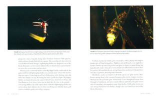 Silent sparks: the wondrous world of fireflies.