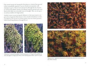 Mosses of dry forests in south eastern Australia.