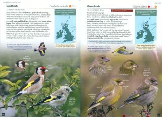 Britain's birds: an identification guide to the birds of Britain and Ireland.