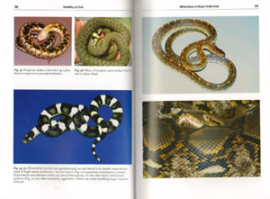 Snake diseases: preventing and recognising illness.