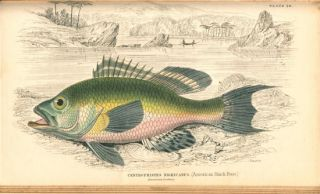 The naturalist's library. Ichthyology, volume one: the Perch family.