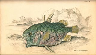 The naturalist's library. Ichthyology, volume two: treating of the nature, structure, and economical uses of fishes.