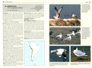 Gulls of the world: a photographic guide.