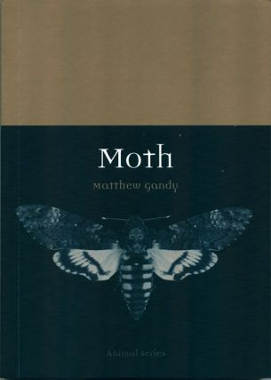 Moth. Matthew Gandy