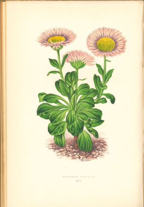 Alpine plants: figures and descriptions of some of the most striking and beautiful of the alpine flowers.