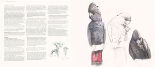 A natural history of Australian parrots: a tribute to William T. Cooper.