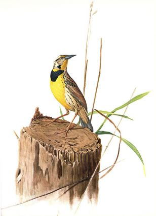 Birds of the eastern forest.