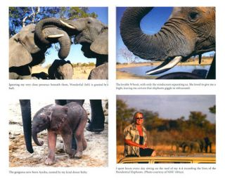 Elephant dawn: the inspirational story of thirteen years living with elephants in the African wilderness.