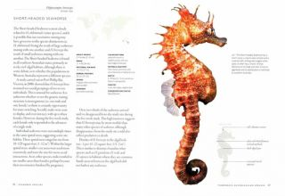 Seahorses: a life-size guide to every species.