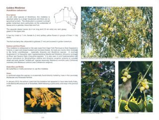 The mistletoes of subtropical Queensland, New South Wales and Victoria.