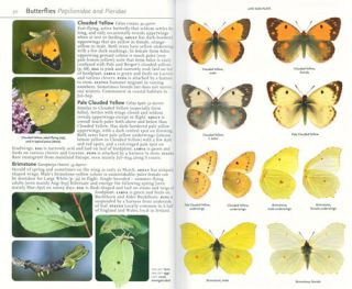 Collins complete guide to British butterflies and moths: a photographic guide to every common species.