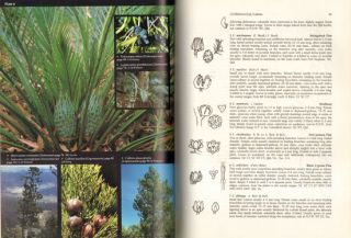 Flora of New South Wales, volume one.