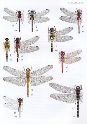 The dragonflies of Europe.
