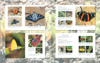 1,000 butterflies: an illustrated guide to the world's most beautiful butterflies.