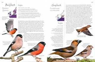 Collins life-size birds: the only guide to show British birds at their actual size.