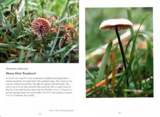 Field guide to mushrooms of Britain and Europe.