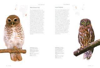 Owls: a guide to every species.