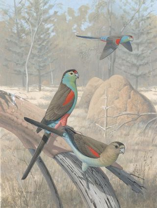 Vanished and vanishing parrots: profiling extinct and endangered species.
