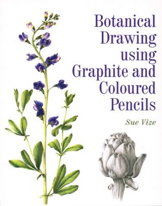 Botanical drawing using graphite and coloured pencils. Sue Vize.
