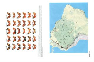 The ecology and evolution of Heliconius butterflies: a passion for diversity.