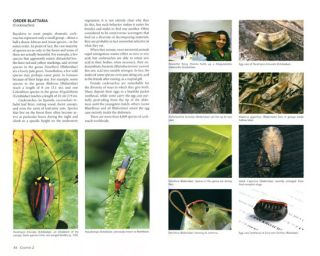 Insects and other arthropods of tropical America.
