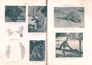 Some vertebrate animals of Ceylon, volume one.
